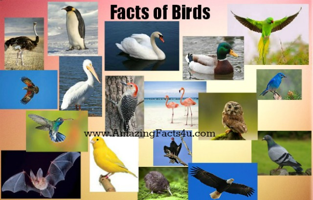 Birds Amazing Facts 4u