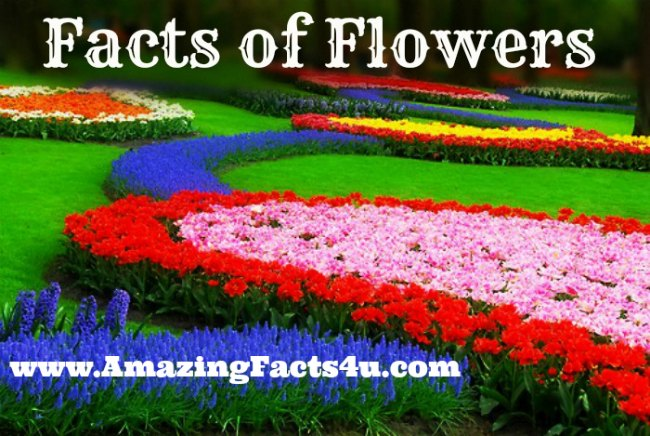 Flowers Amazing Facts