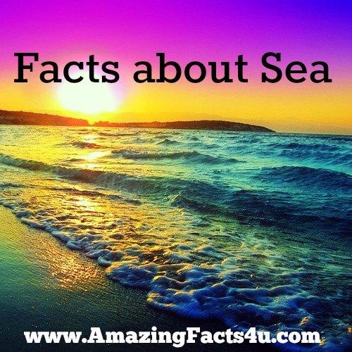 Sea Amazing Facts 4u