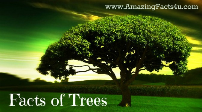 Trees Amazing Facts 4u