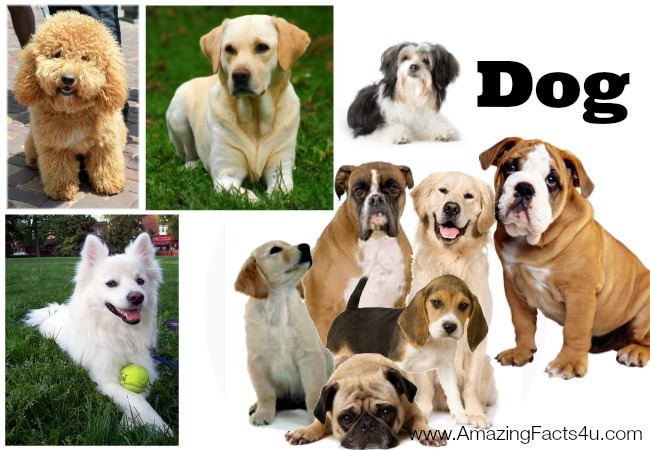 Dog Amazing Facts 4u