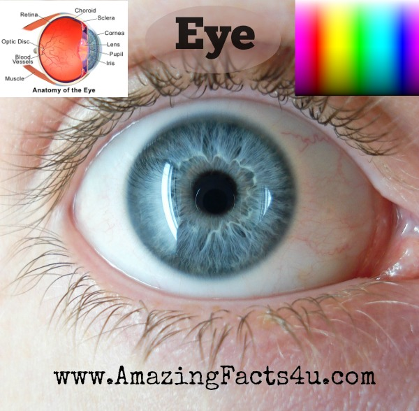 Eye Amazing Facts