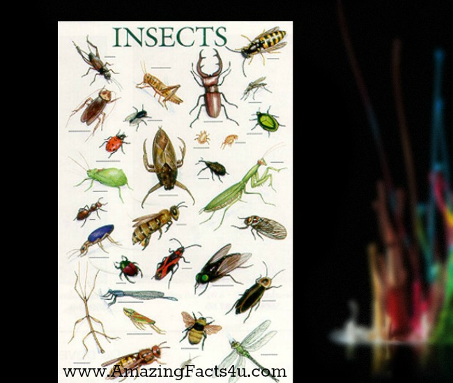 Insects Amazing Facts 4u