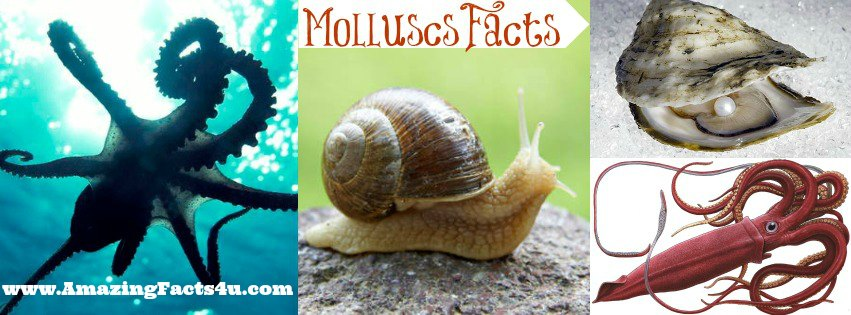 Molluscs Amazing Facts 4u
