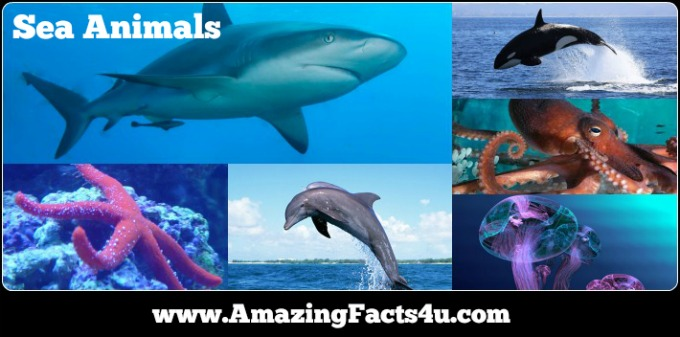 Sea Animals Amazing Facts 4u
