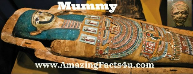 Mummy Amazing Facts 4u