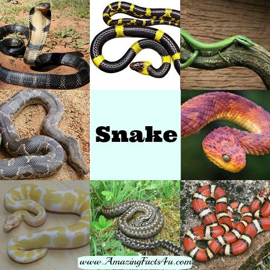 Snake Amazing Facts 4u