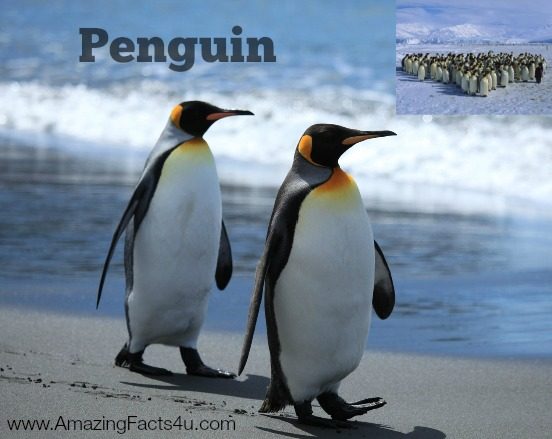 Penguin Amazing Facts