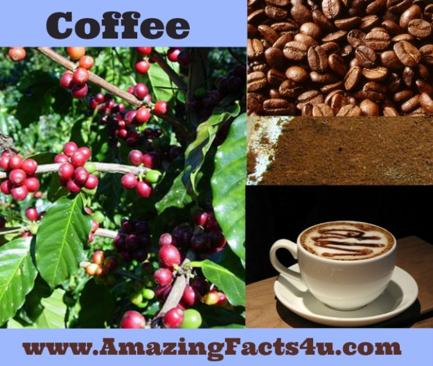 Coffee Amazing Facts