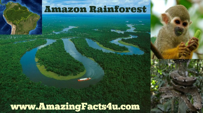 Amazon Rain Forest Amazing Facts