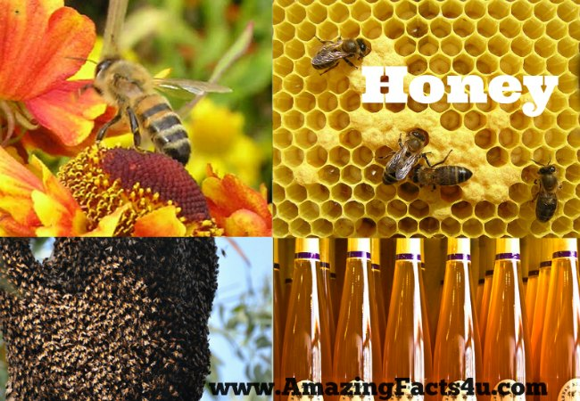 Honey Amazing Facts