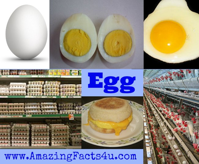 Egg Amazing Facts 4 u