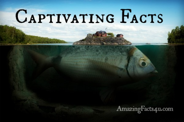 Captivating Facts