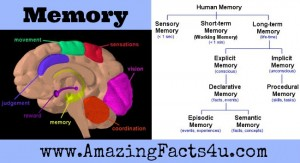 Memory Amazing Facts