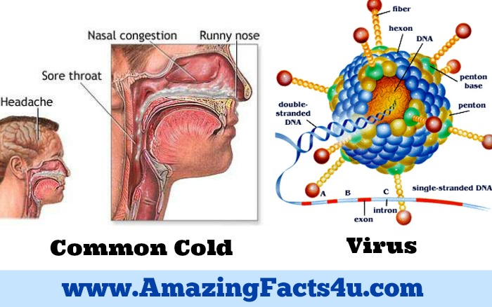 Common Cold Amazing facts