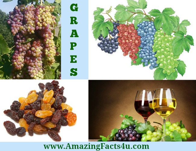 Amazing Facts Grapes