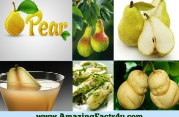 amazing-facts-pear