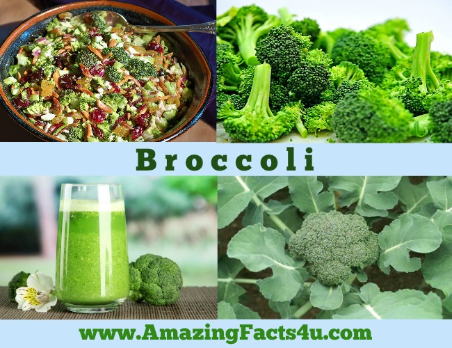 Amazing Facts Broccoli