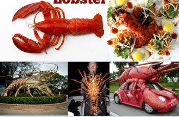 Amazing Facts Lobster