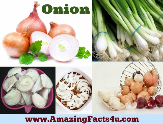 Amazing Onion Facts