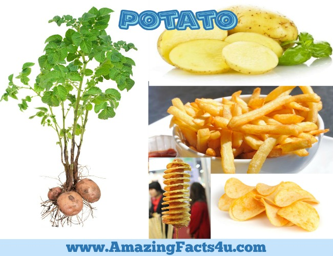 Amazing Facts Potato